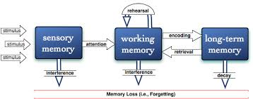 capacity cognitive essay in memory psychology working He though that short-term memory capacity  cognitive psychology (2  multi-store model of memory working memory levels of processing models of memory.