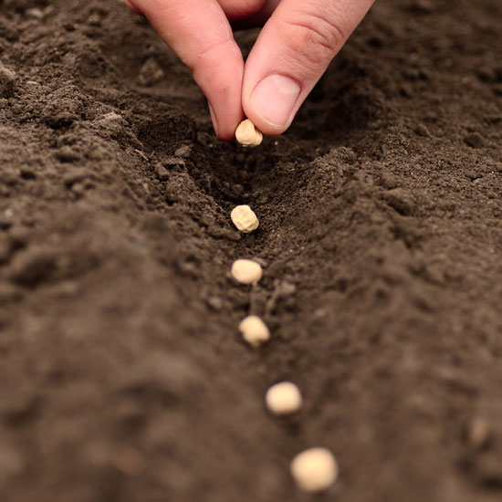 planting-seeds jpg